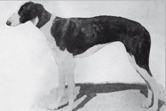 1931-escarcha