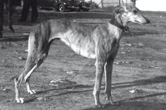 1946-manijera