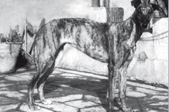 1948-chirucaIII