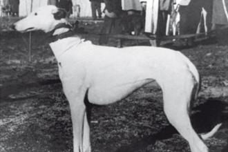 1953-primeraII