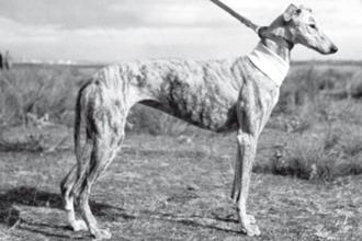 1957-mulataV