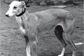 1960-serralla
