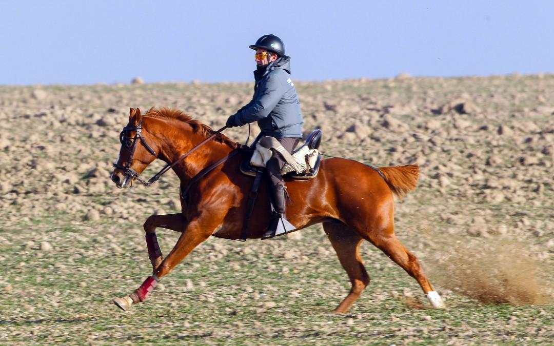Información importante para caballos del Nacional