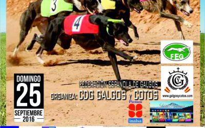 XXX CAMPEONATO DE ESPAÑA DE GALGOS CON LIEBRE MECÁNICA