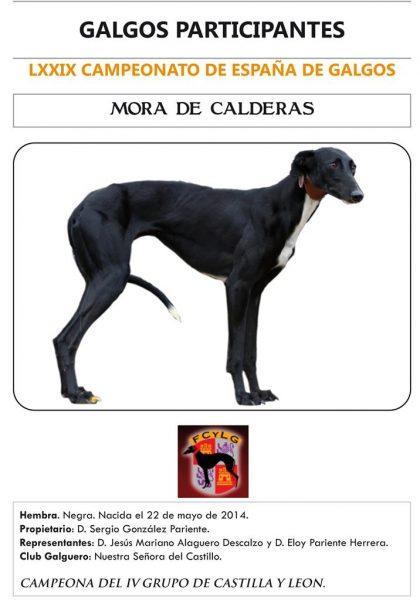 MORA DE CALDERAS