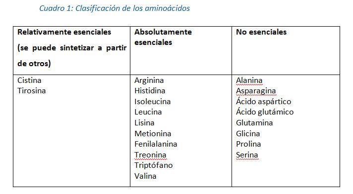 Cuadro 1: Clasificación de los aminoácidos