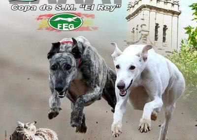 2019. LXXXI CAMPEONATO DE ESPAÑA DE GALGOS EN CAMPO. NAVA DEL REY.
