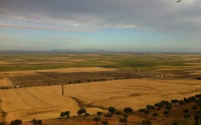 XXXIII CTO DE ESPAÑA DE GALGOS EN CAMPO CON LIEBRE MECÁNICA 1200 M. EL VISO DEL ALCOR